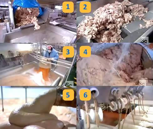 Anatomie d'une saucisse