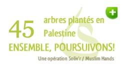 Oliviers en Palestine