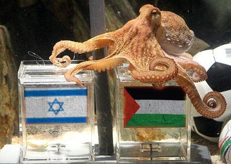 Palestine, Paul le poulpe