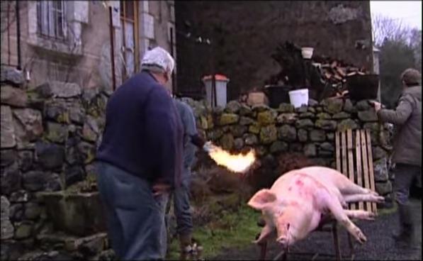 abattage cochon aveyron