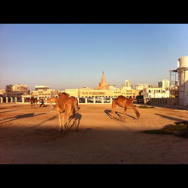Badubai, Tintin chez les Arabes