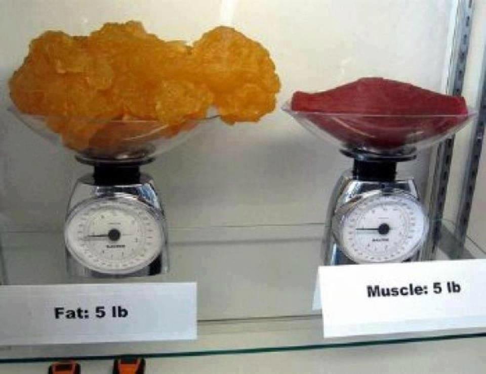 Graisse versus poids
