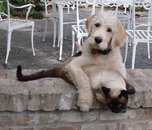 ramadan chien chat
