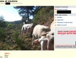 bon-coin-mouton