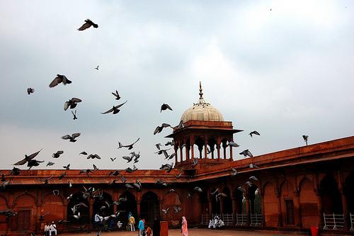 mosquée Jama - New Dehli, Inde