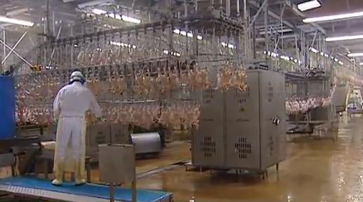 Abattage de poulets, Doux