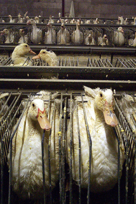 foie-gras-recettes