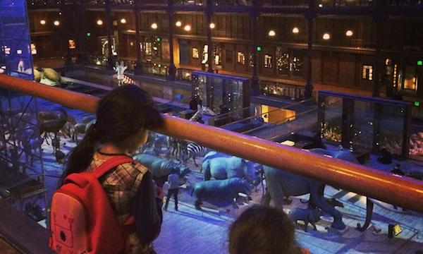 Zalphabus Grande Galerie de l'evolution