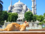 mosquee chat